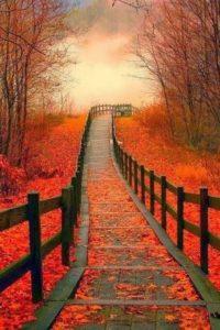 őszi út2